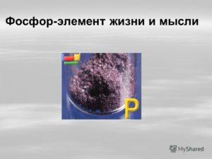 Фосфор — главный элемент?