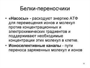 БЕЛКИ-ПЕРЕНОСЧИКИ