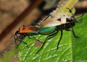 Феромоны насекомых запрещают рабочим размножаться