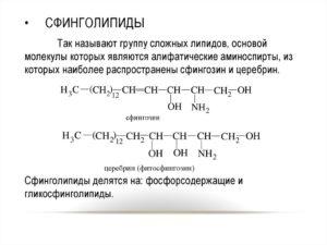 СФИНГОЛИПИДЫ