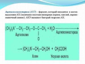 Ацетилхолинэстераза