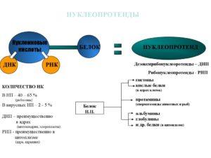 Нуклеопротеиды