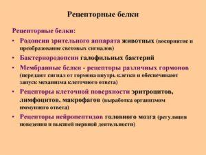 РЕЦЕПТОРНЫЕ БЕЛКИ
