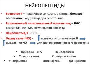 Нейропептиды
