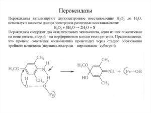 Пероксидазы