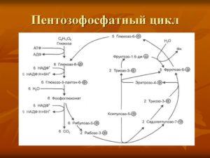 Пентозофосфатный цикл