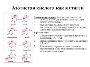 Азотистая кислота