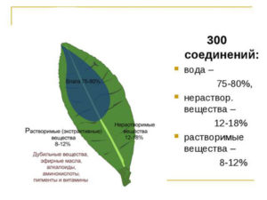 Химия зеленого чая