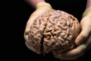 Чем уникален человеческий мозг?