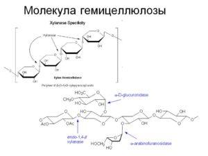 Гемицеллюлозы